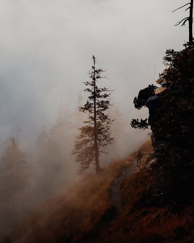 Instagram Photo by Andi Mayr of a tree on a mountain
